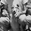 "340thBG,486thBS, ""Jocko"" Tom's dog and the Squadron's Mascot. 1944"