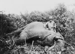 Theodore Roosevelt standing next to dead elephant